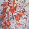 """Sutherlandia Tomentosa ( Cancer Bush)"" (watercolor) by Leonora de Lange"