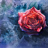 """""""Red Rose"""" (watercolor) by Na Hu"""