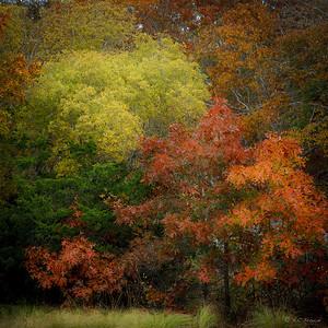 Beech Forest Autumn