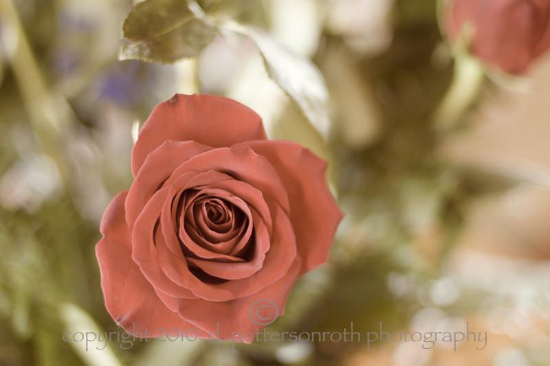 Lin's Rose