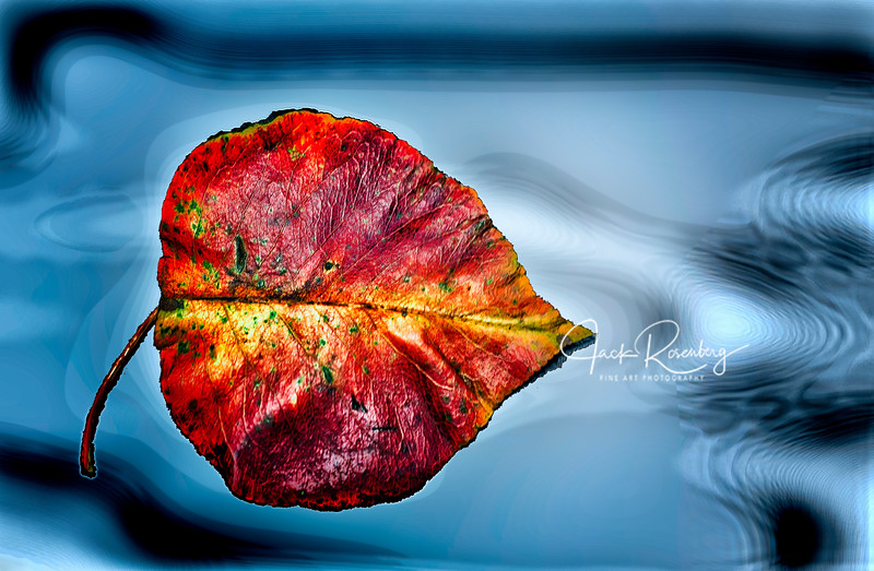 """Floating Red Leaf"""