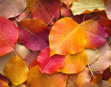 Shades of Autumn..