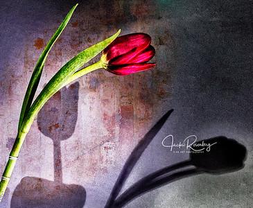 """""""Red Tulip"""""""