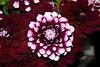 Flower @ Pike's