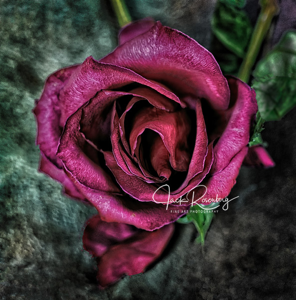 """""""Withering Rose"""""""