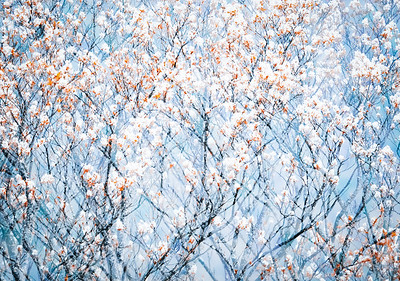 Blossoms and branches..