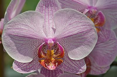 Atlanta Botanical Gardens 6-08 92 of 116 - Version 2