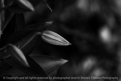 015-plant_detail-ankeny-25jun17-12x08-207-bw-3360