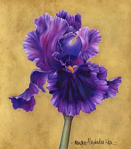 PAGAN DANCE BEARDED IRIS / Iridaceae, sp.