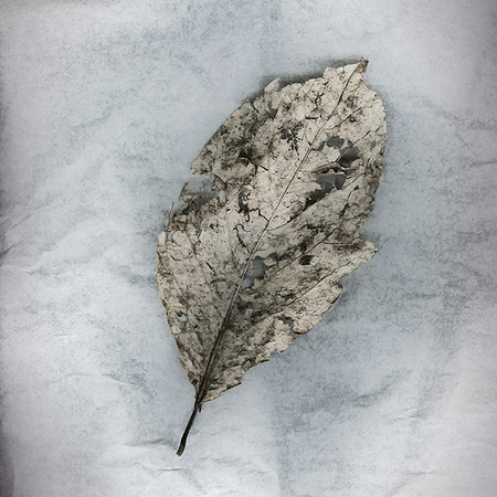Moth Eaten 3