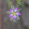 Septembre : deuxième semaine Rixensart > Bois de Rixensart  https://www.google.com/maps/d/edit?hl=fr&mid=1IINiLNtz5ObB6g2SG3o8M5kE4vY&ll=50.714558610680385%2C4.526442375488273&z=14