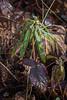 Décembre : troisième semaine Walcourt > Yves-Gomezée > Bois d'Yves https://www.google.com/maps/d/edit?mid=1umFAE4IzQJKxqWuITJrvgZtrx2M&ll=50.2361084458954%2C4.456994804077112&z=14