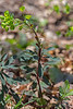 Tige et feuilles