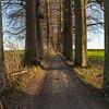 Allée de hêtres (Hertogdaldreef)