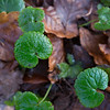 ---------- Décembre : dernière semaine Lobbes > Bois de Fontaine https://www.google.com/maps/d/edit?mid=1a3V1w8SL5M2arxtnBrrn-zvzabk&ll=50.37030468406455%2C4.298221661376942&z=14 ----------