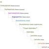 Classification APG IV