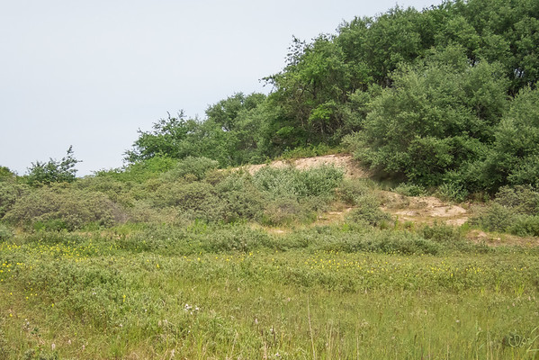 Prairie à Rhinanthe à feuilles étroites dans le Westhoek