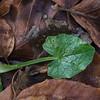 ---------- Février : première semaine Watermael-Boitsfort > Vallon du Wollenborre https://www.google.com/maps/d/edit?mid=1tgi9CNbTW0KAA29uzjRcMXeRV-Q&ll=50.78451228417852%2C4.399468592590324&z=15 ----------
