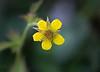 La fleur en fin de floraison