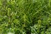 ---------- Avril : troisième semaine Sprimont > Dolembreux > Hautgné https://www.google.com/maps/d/viewer?mid=1T5GujoTZuLYGBet74GCe3VLUz3M ----------