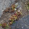 Avril : deuxième semaine Woluwe-St-Lambert > Boulevard de la Woluwe  https://www.google.com/maps/d/edit?mid=1Qf77IeBBVJfVatUAMVep9uR5LbI&ll=50.842043375999054%2C4.436921666666649&z=15