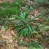 ---------- Septembre : deuxième semaine Rixensart > Bois de Rixensart https://www.google.com/maps/d/edit?hl=fr&mid=1IINiLNtz5ObB6g2SG3o8M5kE4vY&ll=50.72052307957688%2C4.532256243286156&z=14 ----------