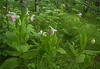 Showy's and Bottle Ferns