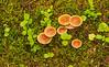Mushrooms in a spruce-tamarack bog