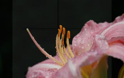 TOOKER Gardens-41