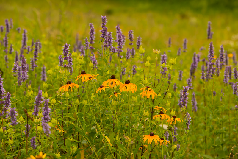 Color on the prairie