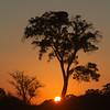 Sunrise at Mashatu