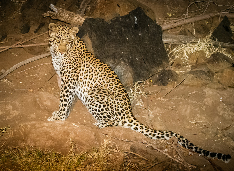Second Leopard on Riverbank