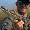 While in Botswana I caught this little 3-4ft Nile croc off the front of the boat, such a gorgeous little one! The eyes on niles are so pretty!! We checked him out for a few photos and released him. <br /> Photo taken of me by Jeff Schmidt