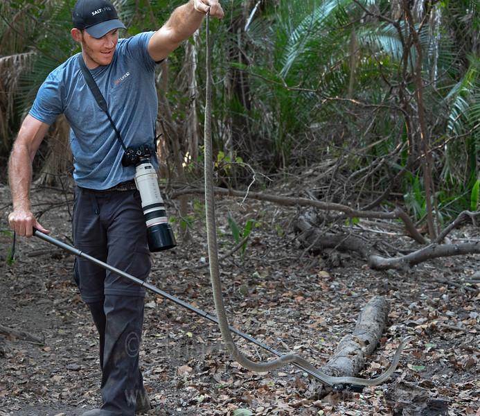 Handling a 7ft black mamba