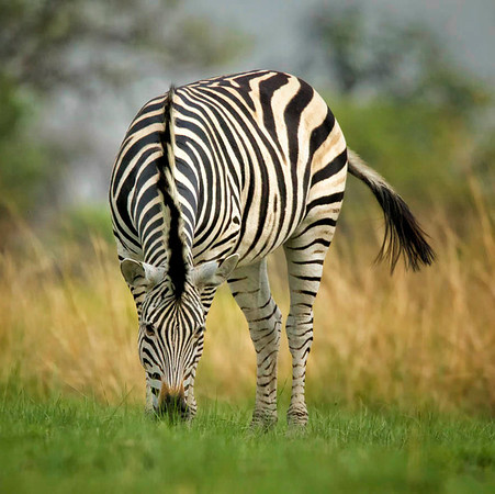 Botswana - Nov 2011