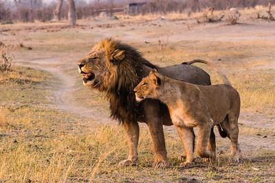 Botswana Savute Elephant Lodge