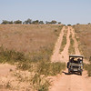 We watched for game as our vehicles drove out of the Savuti area toward the Ngoma area, all in Chobe National Park. We drove out of the pale soils of the dry lake area and onto red sandy soils, taking in the views of landscape and animals as we went. By Debbie Thompson on August 2, 2008.