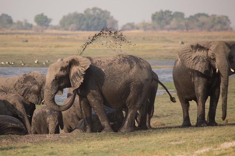 Elephants taking a break