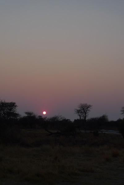 2011 AUG 16 Safari day 2