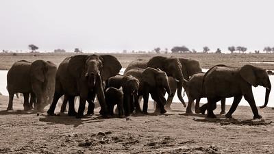 Chobe Park Safari Game Drive