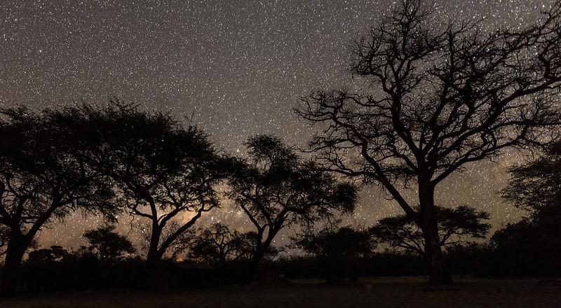 African Night