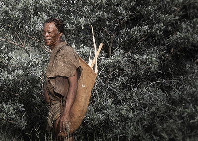 The elderly bushman