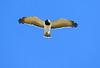 Martial-Eagle_Botswana