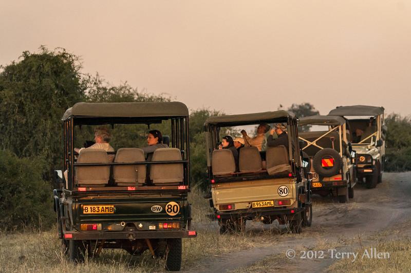 Safari-vehicles-watching-lion-kill-at-sunset
