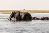 Elephants-crossing-Chobe-River-4