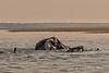 Elephants-crossing-Chobe-River-3