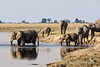 Elephants-starting-river-crossing-at-sunset