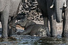Mother-and-baby-elephants-drinking-from-Chobe-River-2