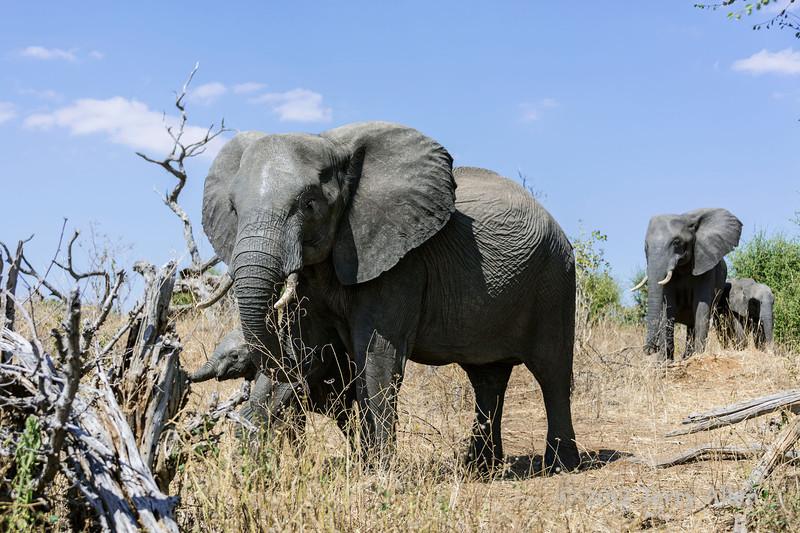 Elephants-on-the-way-to-Chobe-River
