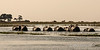 Herd-of-elephants-crossing-Chobe-River